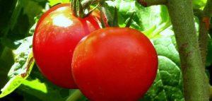صورة اضرار الطماطم على البشرة , اذى الطماطم على الوجه