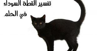 الحلم بقط اسود , تعرفى على القطة السوداء فى المنام