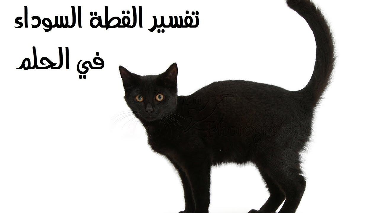 صورة الحلم بقط اسود , تعرفى على القطة السوداء فى المنام