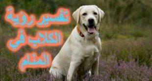 صور معنى الكلب في الحلم , تفسير حلم الكلاب فى المنام