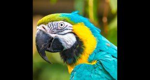 صور اجمل صور الببغاء , لقطات لاجمل الحيوانات المتكلمة