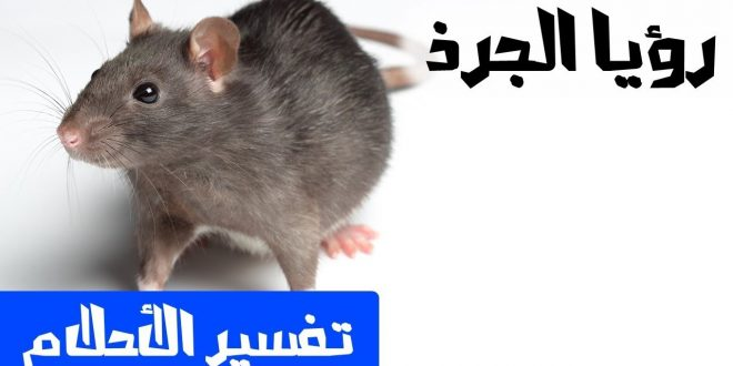 صور تفسير حلم فئران , معانى ودلالات لوجود الفئران فى المنام