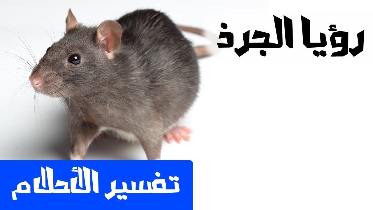 تفسير حلم فئران معانى ودلالات لوجود الفئران فى المنام فنجان قهوة