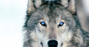 صور عيون زرق , لقطات لعيون البحر الخلابة