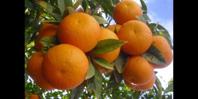 صور تفسير حلم اكل البرتقال , ادهشنى البرتقال فى احلامى