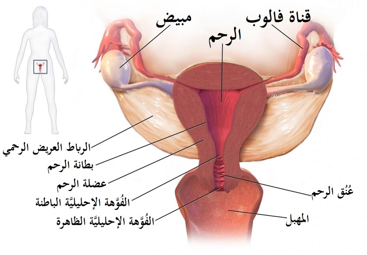 صورة اعراض التهاب الرحم وعلاجه , عند معرفة السبب يسهل العلاج