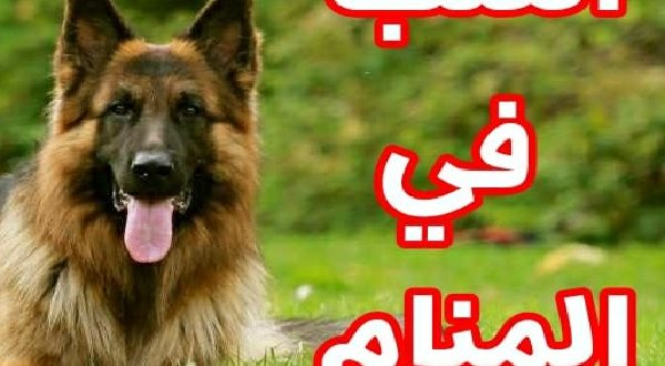 صور تفسير حلم الكلاب , اسرار عالم الاحلام فرؤية الكلب