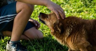 صور ما حكم لمس الكلاب , هل الكلب نجس