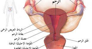 صورة ماهو علاج التهاب الرحم , التهاب المهبل اسبابه وطرق علاجه