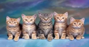 في المنام قطة , رؤيه القطه في المنام علاما ترمز