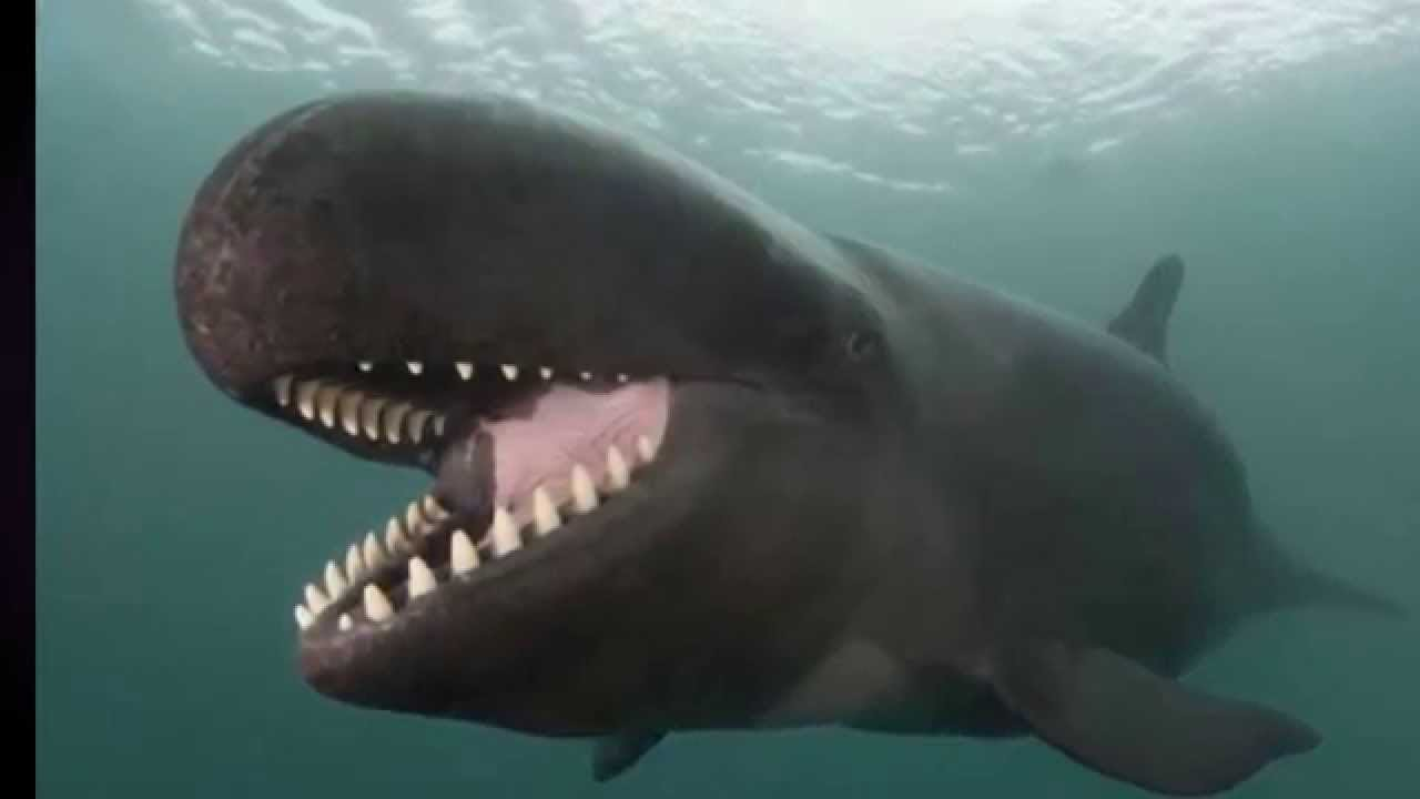 صورة تفسير الحوت في المنام , شوفت حوت و انا نايمة