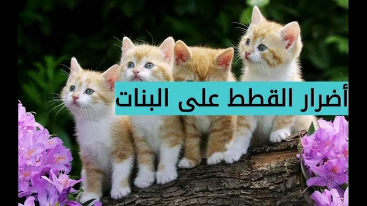 صورة اضرار تربية القطط في المنزل , ما هي اضرار القطط في البيت