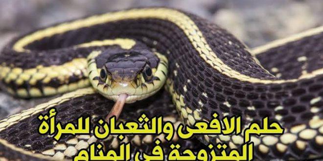 صورة الافاعي في المنام لابن سيرين , الثعبان في المنام ما دلالاته