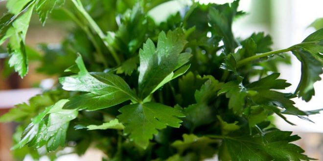صورة يستخدم للتخلص من رائحة الثوم والبصل , حل مزهل لرائحة البصل والثوم