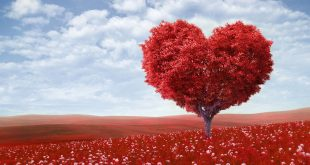 اكبر قلب حب في العالم , قلب احمر يخطف النظر بشده