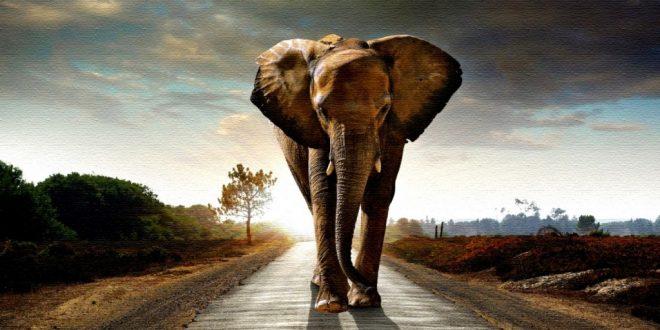 صورة تفسير الاحلام الفيل , رؤيه الفيل خير و رزق كبير تعرف على التفسيرات المهمه