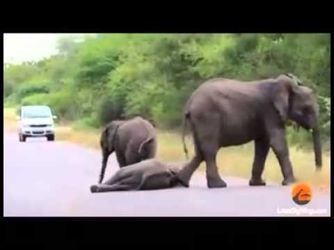 صورة عجائب عالم الحيوان , غرائب وعجائب وطرائف في حديقة الحيوانات