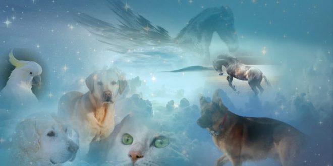 صورة هل للحيوان روح , تمييز الله الانسان بالروح