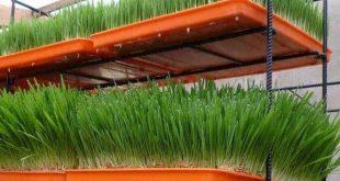 صورة طريقة عمل غرفة استنبات الشعير , كيف ازرع الشعير فى اى مكان