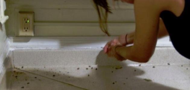 صورة التخلص من الصراصير الصغيرة , طرق للقضاء على صغار الصراصير بفعاليه