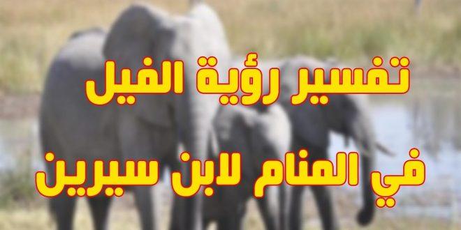 صورة تفسير الفيل في المنام , رايت الفيل في منام اريد التفسير؟