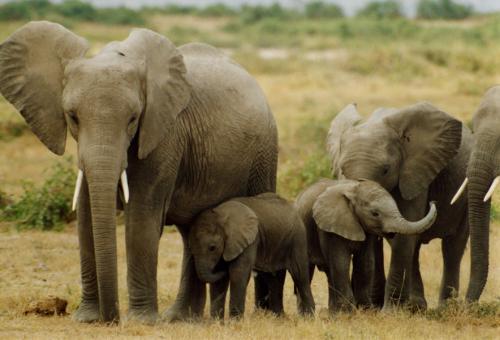صورة صورة عن الفيل , الافيال مخلوقات رائعه تعرف عليها