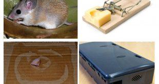صورة جهاز طارد الفئران , طريقه سهله للقضاء علي الفئران