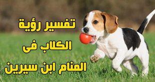 معنى رؤية الكلاب في المنام , تفسير رؤيه الكلاب