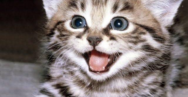 صورة تفسير حلم ولادة قطة , قطة صغيرة مولودة