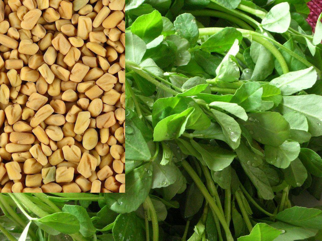 صورة فوائد الحلبة الخضراء للرجل , اهم فوائد الحلبه الخضراء