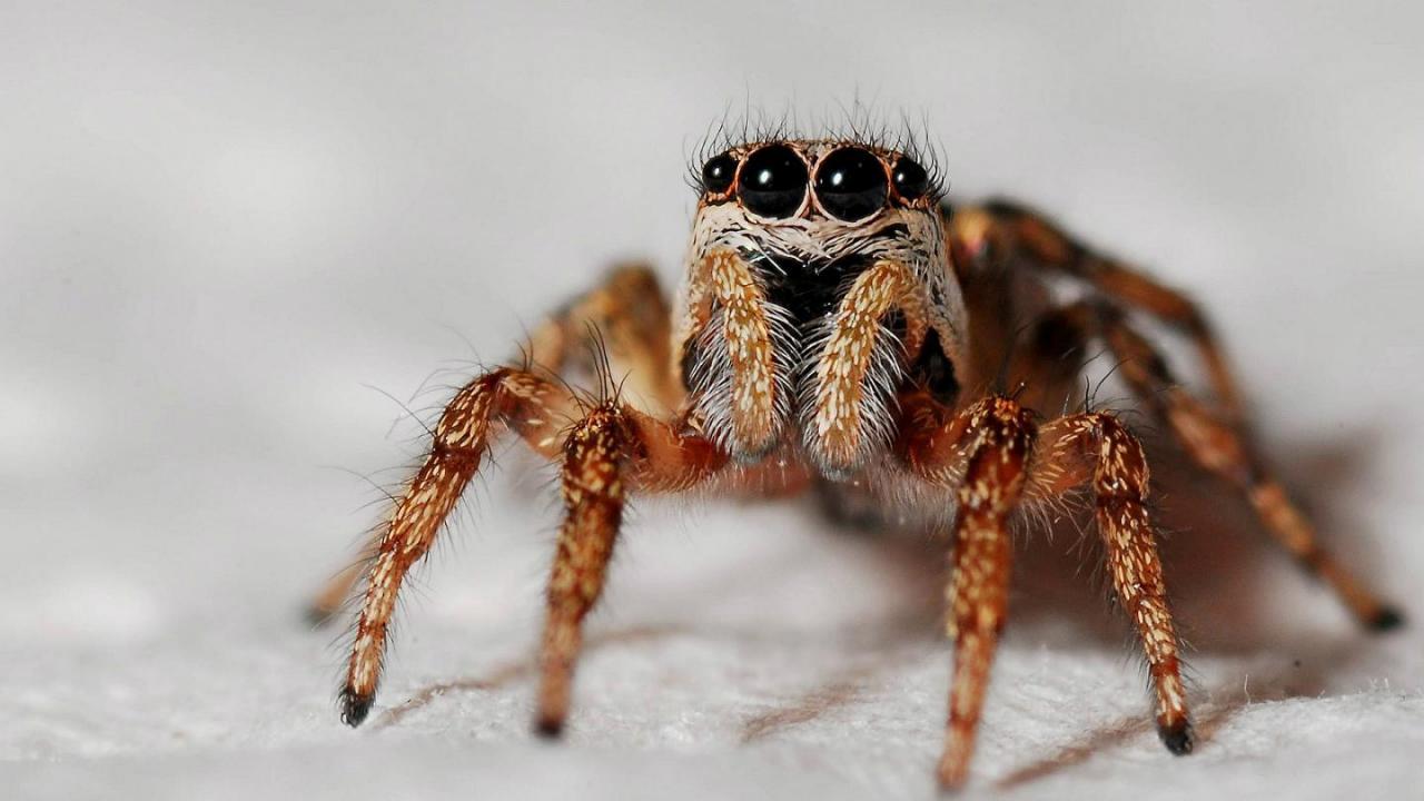 صورة كم رجل للعنكبوت , معلومة روعة عن العنكبوت