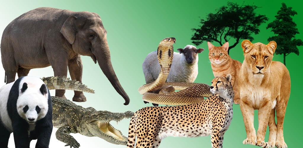 صورة اسماء وصور الحيوانات , غرائب وعجائب الحياه البريه